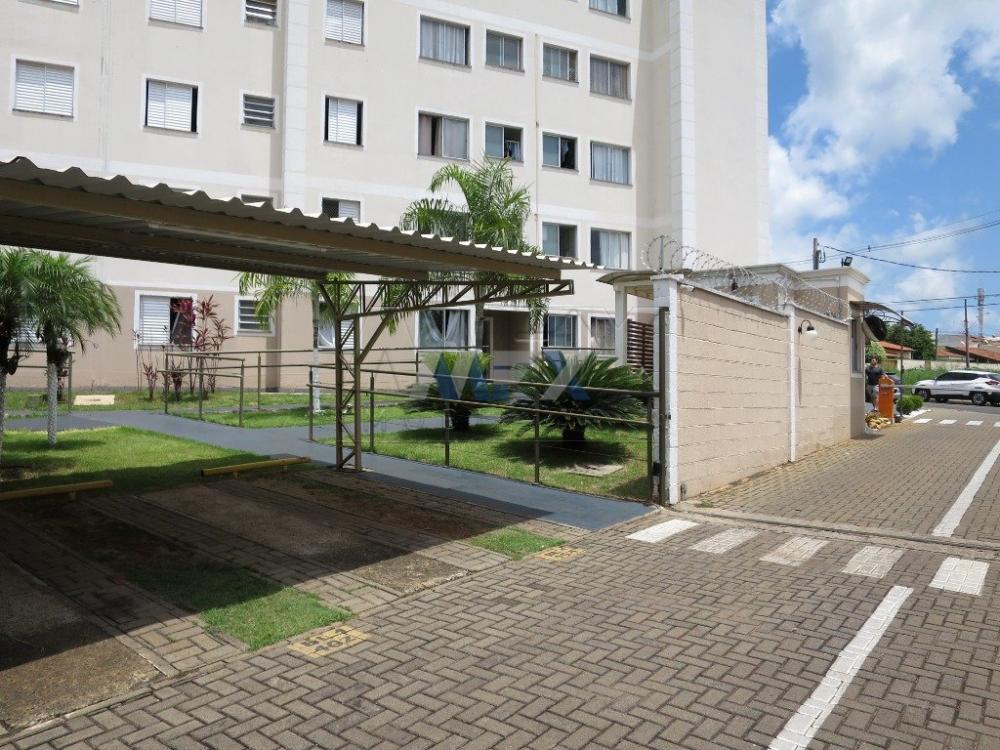 Alugar Apartamento / Padrão em Bauru R$ 780,00 - Foto 9